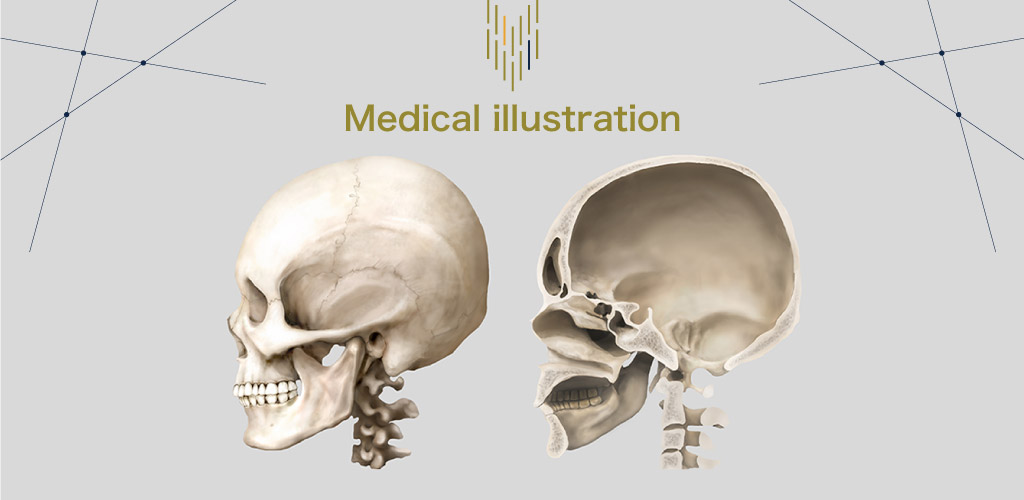 medicalillustration